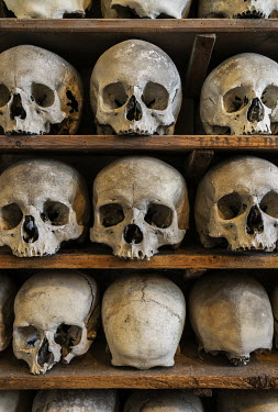 Stephen Mulcahey HUMAN SKULLS ON CRYPT SHELVES Miscellaneous Objects