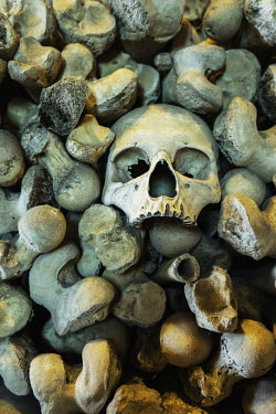 Stephen Mulcahey HUMAN SKULL SURROUNDED BY PILE OF BONES Miscellaneous Objects