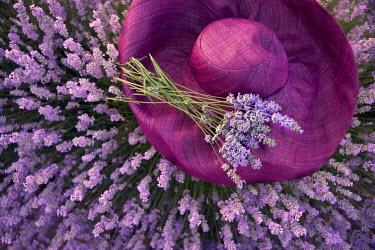 Maria Petkova LAVENDER FLOWERS AND PURPLE SUN HAT Flowers