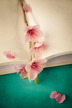 Amy Weiss PINK FLOWERS LYING ON OPEN BOOK Flowers
