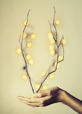 Jean Fan WOMANS HAND HOLDING TWIGS AND LIGHTS Body Detail