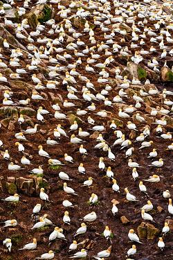 Evelina Kremsdorf MANY BIRDS PERCHED ON ROCK OUTSIDE Birds