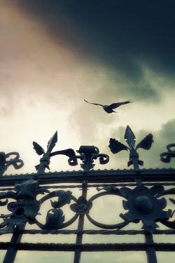 Yolande de Kort BIRD FLYING OVER IRON GATE OUTSIDE Gates