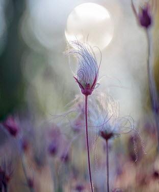 Franci van der Vyver FLOWERS GROWING OUTSIDE AT DAWN Flowers/Plants