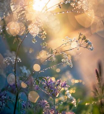 Franci van der Vyver FLOWERS COVERED IN DEW DROPS OUTSIDE Flowers/Plants