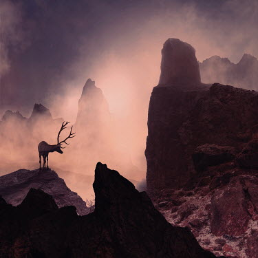 Caras Ionut SILHOUETTE OF REINDEER IN ROCKY LANDSCAPE Animals