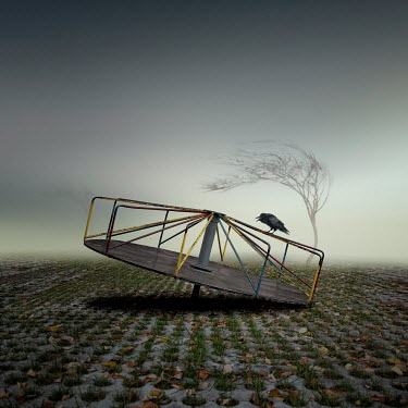 Caras Ionut BIRD PERCHED ON ROUNDABOUT OUTSIDE Miscellaneous Objects