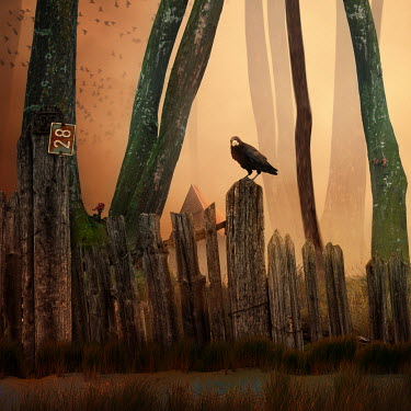 Caras Ionut BIRD PERCHED ON GATE IN COUNTRYSIDE Birds