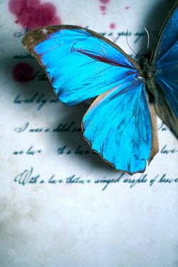 Ebru Sidar BUTTERFLY ON BLOOD STAINED LETTER Insects