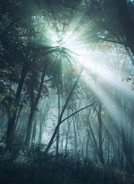 Mark Owen SUNLIGHT SHINING THROUGH EMPTY FOREST Trees/Forest