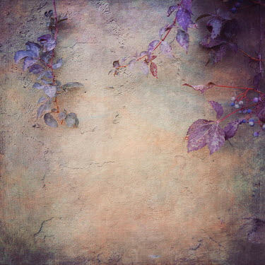 Dawn Hanna LEAVES GROWING ON RUSTIC WALL OUTSIDE Flowers/Plants