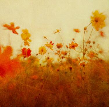 Dawn Hanna WILD FLOWERS GROWING IN COUNTRYSIDE Flowers/Plants