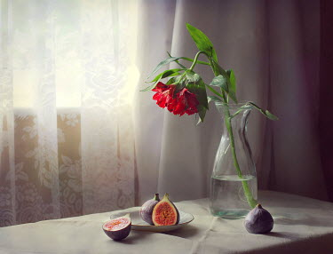 Vesna Armstrong FIGS AND FLOWER IN VASE INDOORS Miscellaneous Objects