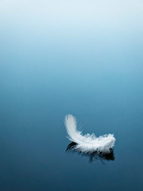 Emma Goulder FEATHER FLOATING ON CALM WATER Miscellaneous Objects
