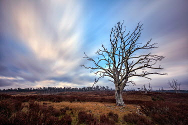 Evelina Kremsdorf TREE IN AUSTRALIAN OUTBACK Desert