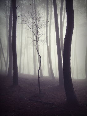 Guillermo Rodriguez Carballa TREES IN EMPTY MISTY WOODS Trees/Forest