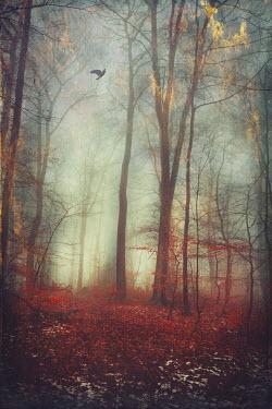 Dirk Wustenhagen FOREST ON FIRE Trees/Forest