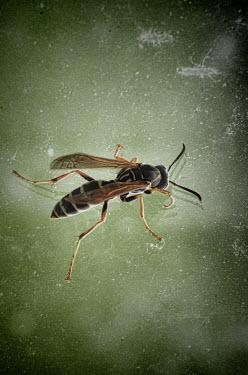 Jill Battaglia WASP CLOSE UP Insects