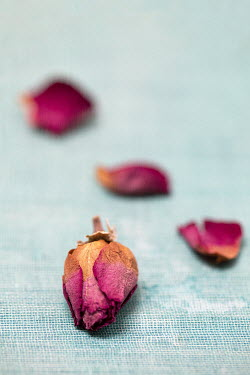 Alison Archinuk DRIED ROSE AND PETALS Flowers