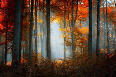 Ildiko Neer EMPTY AUTUMN FOREST Trees/Forest