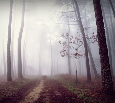 Guillermo Rodriguez Carballa PATH THROUGH EMPTY MISTY WOODS Trees/Forest