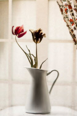 Nilufer Barin FLOWERS IN JUG ON TABLE Flowers