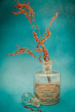 David Pairé FLOWERS IN VINTAGE PERFUME BOTTLE Flowers