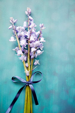 Miguel Sobreira BLUEBELL FLOWERS TIED WITH RIBBON Flowers