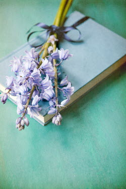 Miguel Sobreira BLUEBELL FLOWERS LYING ON BOOK Flowers