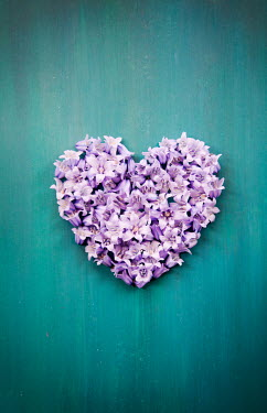 Miguel Sobreira BLUEBELL FLOWERS IN HEART SHAPE Flowers