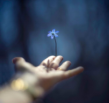 Franci van der Vyver HAND HOLDING BLUE FLOWER OUTSIDE Body Detail