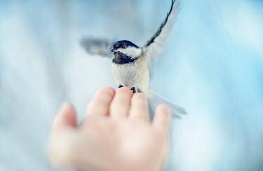 Franci van der Vyver CLOSE UP OF BIRD LANDING ON HAND Body Detail