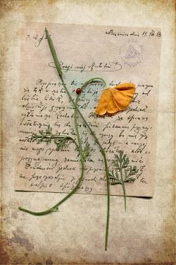 Magdalena Wasiczek PRESSED FLOWER ON OLD LETTER Flowers