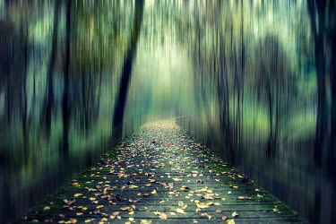 Christine Amat PATH THROUGH GREEN DREAMLIKE WOODS Paths/Tracks