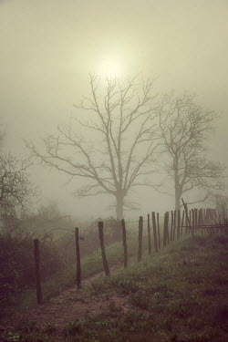 Paul Grand SUN RISING OVER TREES AND FENCE Fields