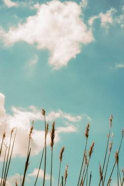 Sally Mundy LONG PAMPAS GRASS UNDER BLUE SKY Flowers/Plants