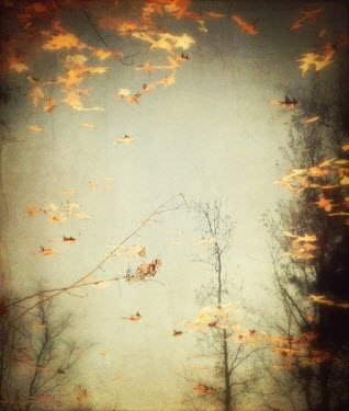 Dawn Hanna AUTUMN TREES AND LEAVES Trees/Forest