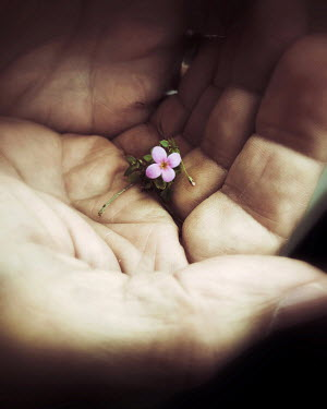 Dawn Hanna HAND HOLDING TINY FLOWER CLOSE UP Body Detail