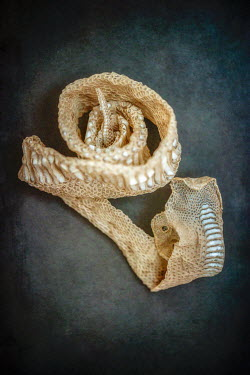 Sally Mundy SHRIVELLED DEAD SNAKE SKIN Animals
