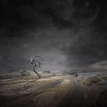 Zoltan Toth BARE WINTRY TREE IN DESOLATE LANDSCAPE Trees/Forest