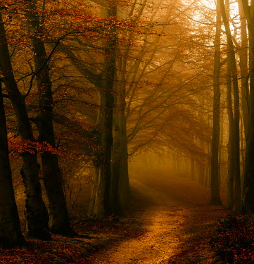 Lars van de Goor EMPTY PATH THROUGH AUTUMN FOREST Paths/Tracks