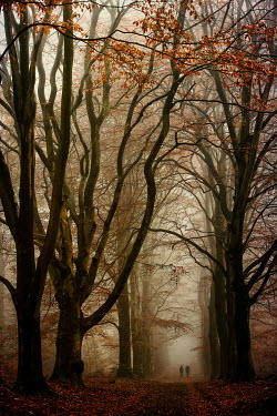 Lars van de Goor DISTANT COUPLE IN AUTUMN FOREST Couples