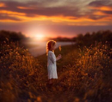 Jake Olson LITTLE GIRL IN WHEAT FIELD AT SUNSET Children