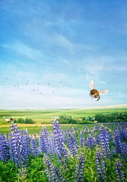 Sandra Cunningham BEE FLYING OVER FLOWERS IN COUNTRYSIDE Insects