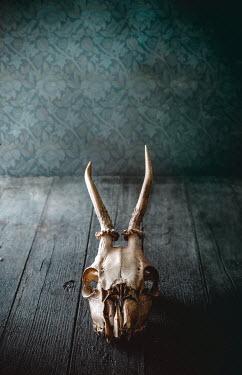 Drunaa ANIMAL SKULL ON WOODEN FLOOR Miscellaneous Objects