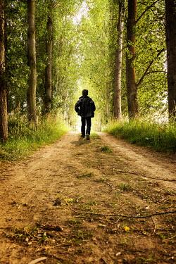 Stephen Mulcahey SILHOUETTE OF BOY ON TREE LINED PATH Children