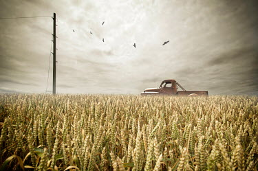 Nicola Smith BIRDS FLYING OVER TRUCK IN CORN FIELD Miscellaneous Transport