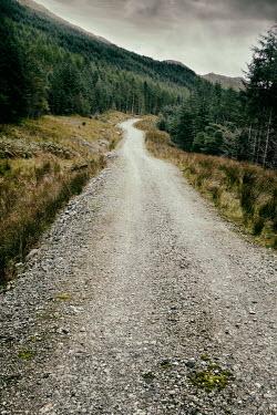 Tim Robinson EMPTY TREE LINED PATH THROUGH MOUNTAINS Paths/Tracks