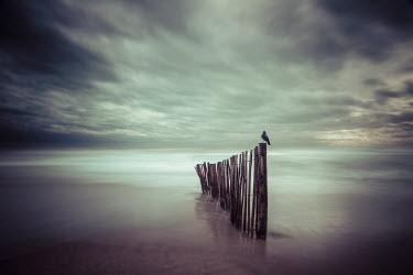 Christophe Dessaigne BLACK BIRD PERCHED ON BROKEN FENCE IN SEA Seascapes/Beaches