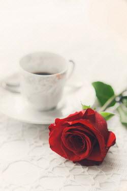 Ildiko Neer RED ROSE FLOWER AND WHITE TEACUP Flowers